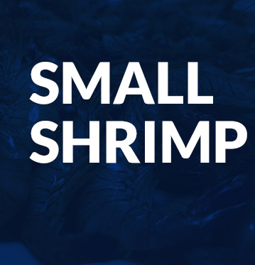 Small shrimp